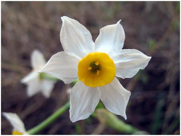 Flower2 by koshadesing