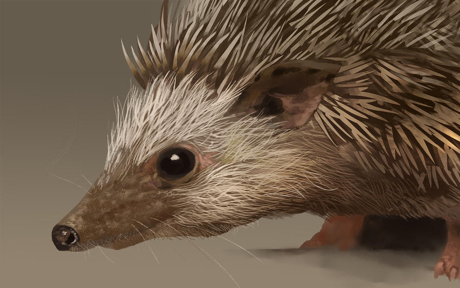 Hedgehog2 by Shev14th