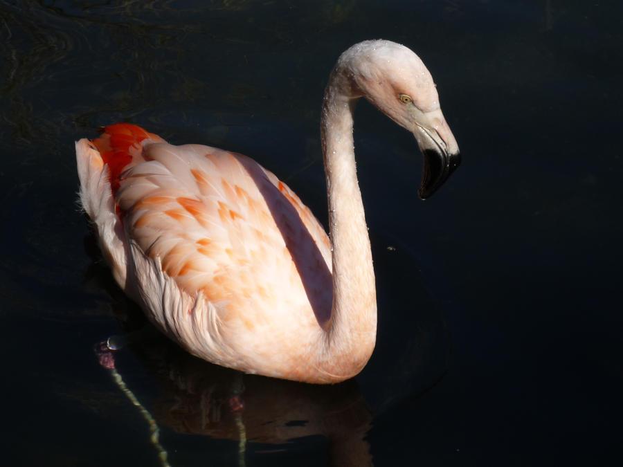 Flamingo by astromechanic86