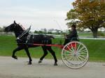 Draft Horse 3