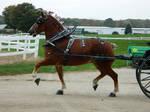 Draft Horse 7