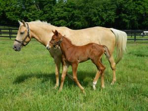 Thoroughbred Foal 2