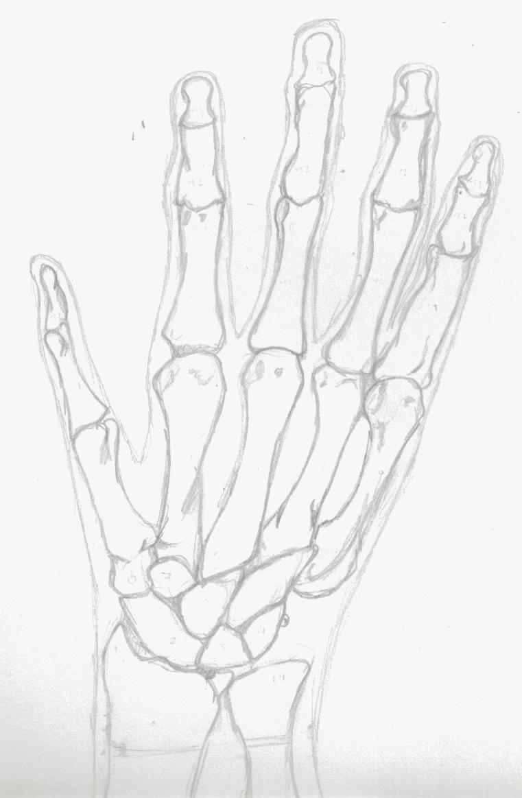 Huesos de la mano by DearSnuffles on DeviantArt