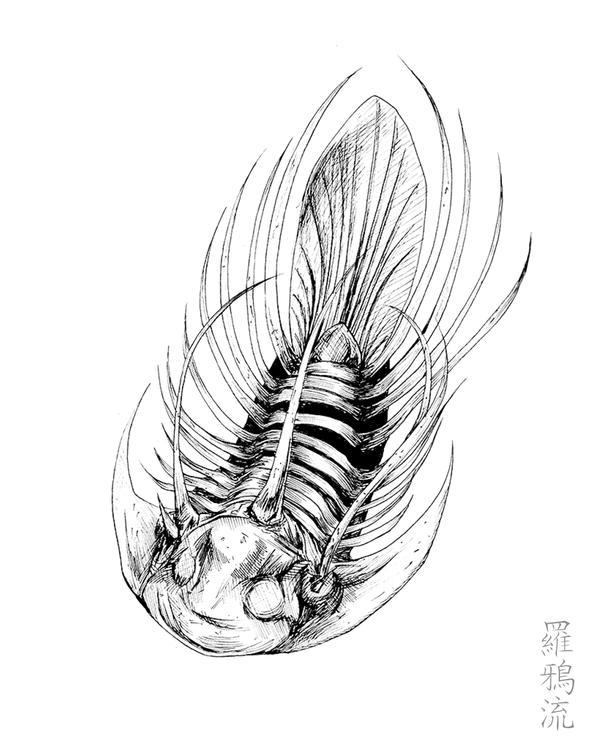 Kolihapeltis Rabatensis by X-RaD