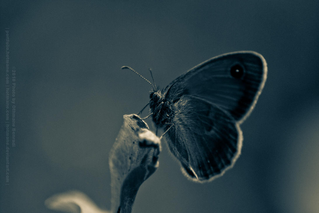 Nature and Insects - 22 by Hotmane