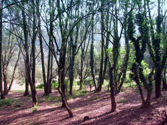 Bosque by Alexpintor