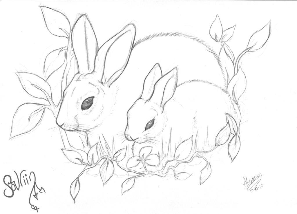 Line Art Rabbit : Rabbit line art