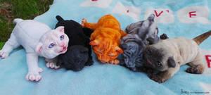 Litter of Kittens - FOR SALE