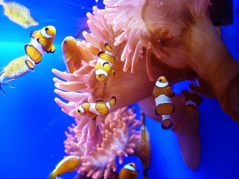 Clownfish Aquarium of Genoa by ely707