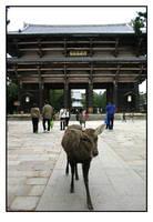 The Guardians Of Nara by stevezpj