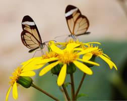 Couple on Yellow by stevezpj