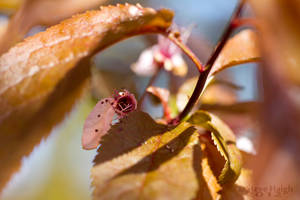 Leaf Vortex by stevezpj