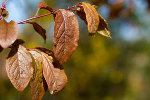 Leaves by stevezpj