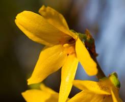 Yellow by stevezpj