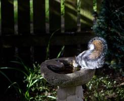 Squirrel Refreshment by stevezpj