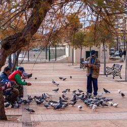 Feeding Pigeons by stevezpj