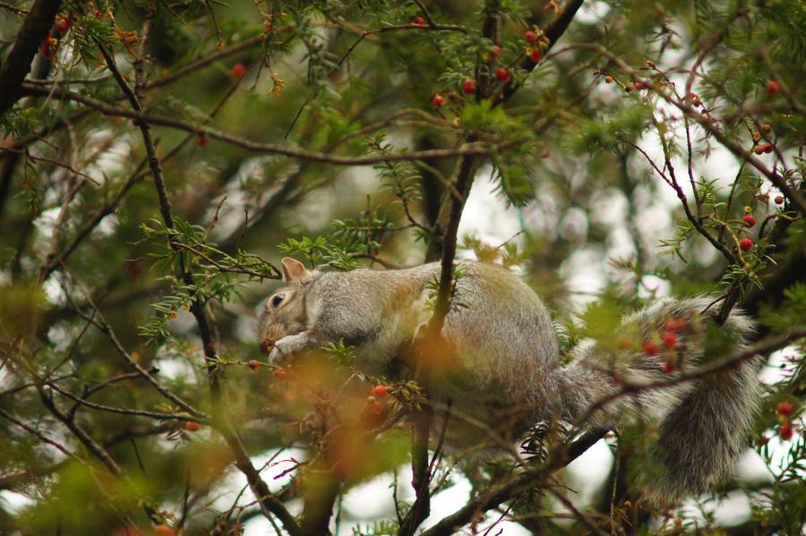 Squirrel by Lone-Onyx-Stardust