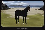 BTs Tortuga