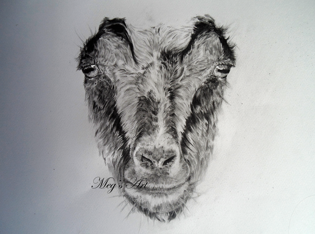 Goat Face by stardust12345 on DeviantArt Goat Face Side Drawing