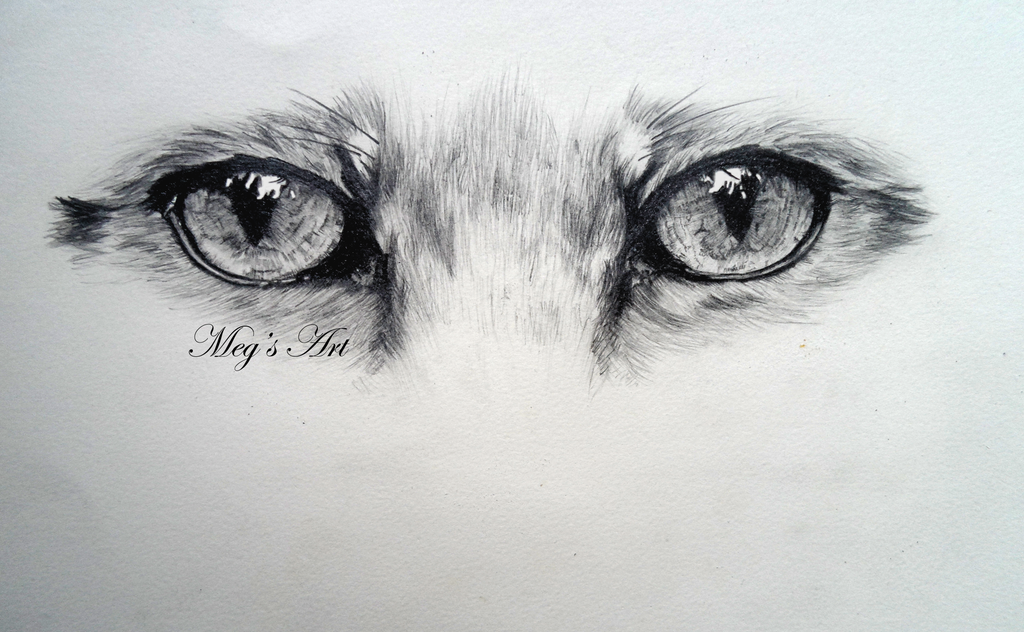 Animal Eyes With Lashes For Crafts