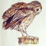 Tawny Owl painting