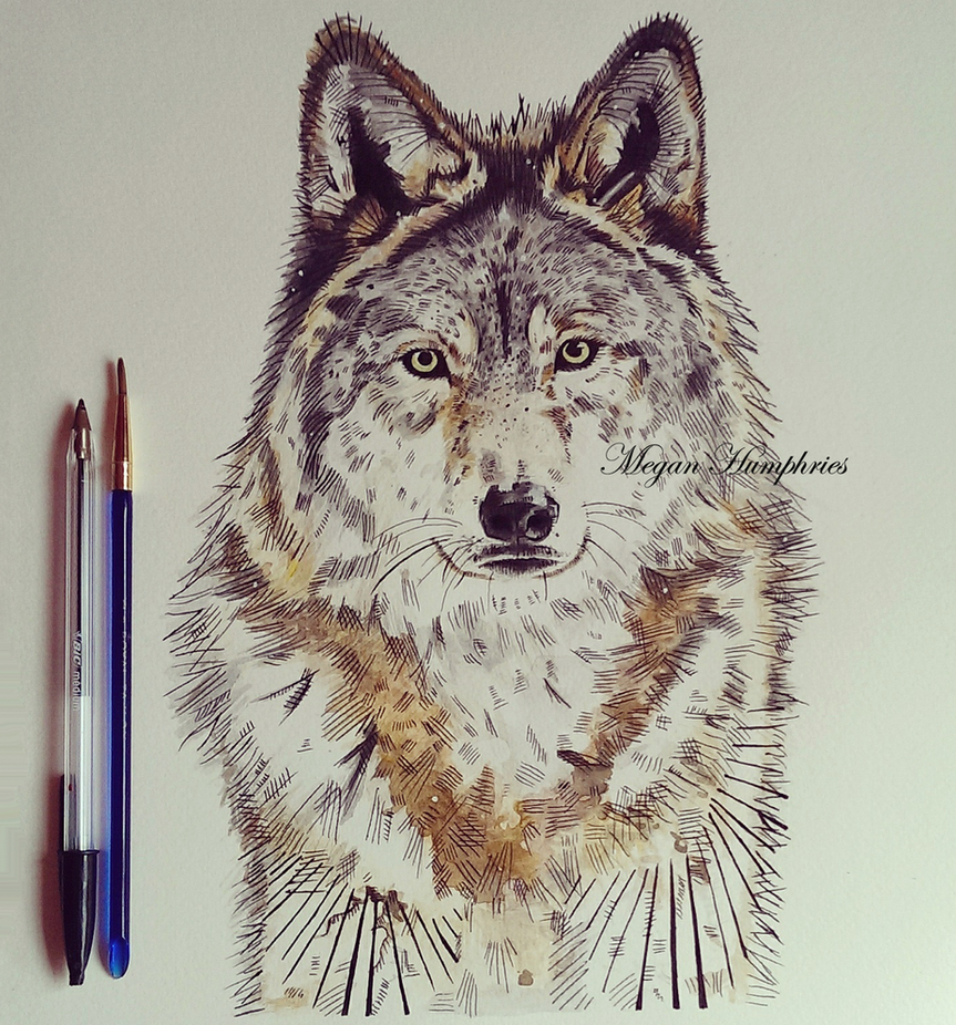 Wolf by stardust12345