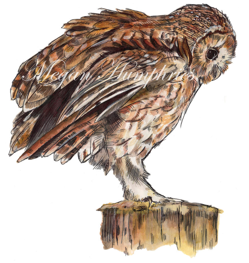 Limited Edition Tawny Owl Giclee Prints by stardust12345