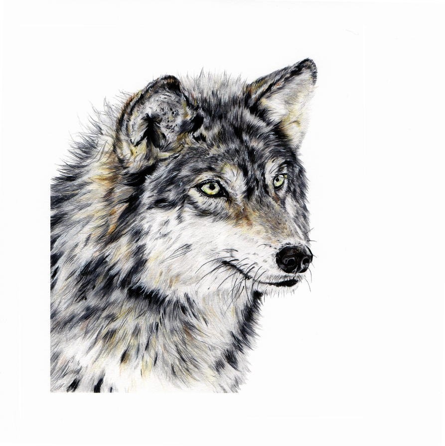 FOR SALE wolf head prints by stardust12345