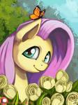 Shy Butterfly