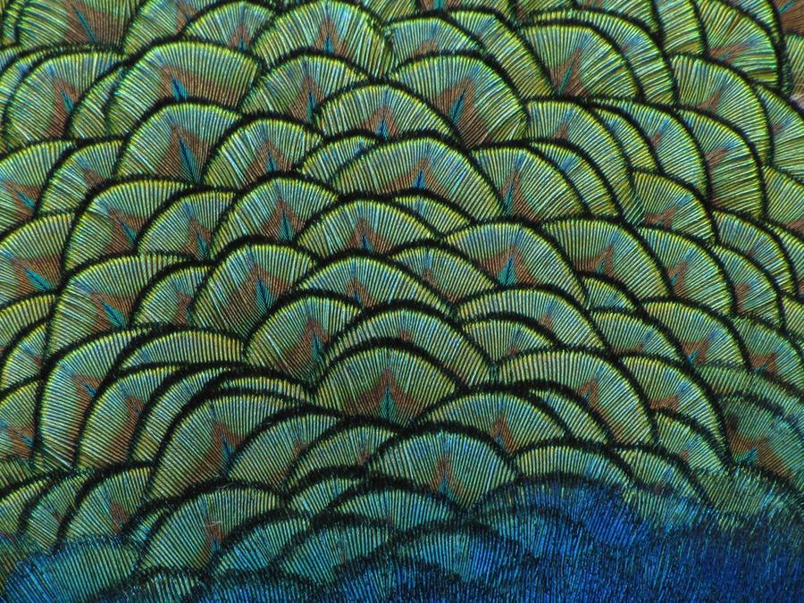 Pin Free-animal-texture-002jpg on Pinterest