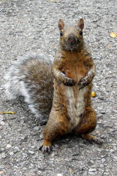 Squirrel 2