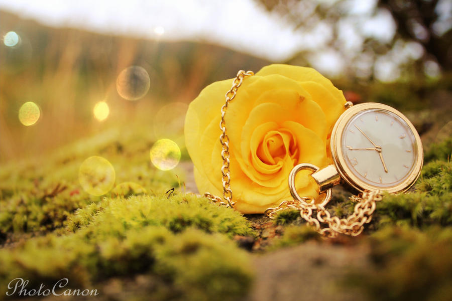 RoseClock by PhotoCanon