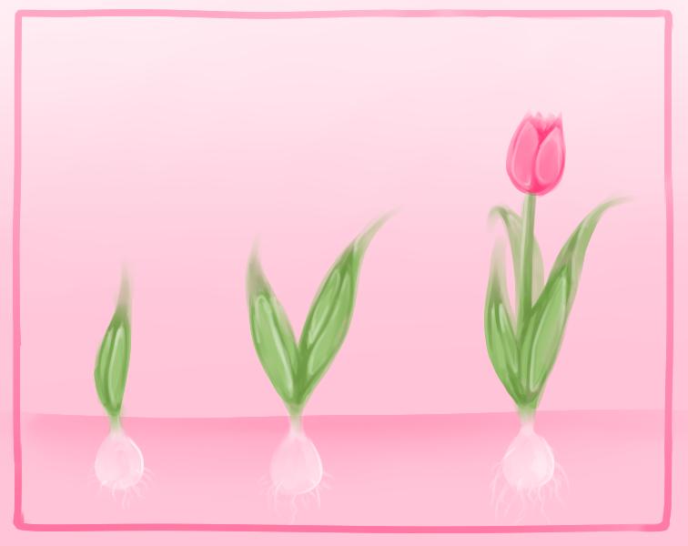 Tulip sprout by Mannylinn