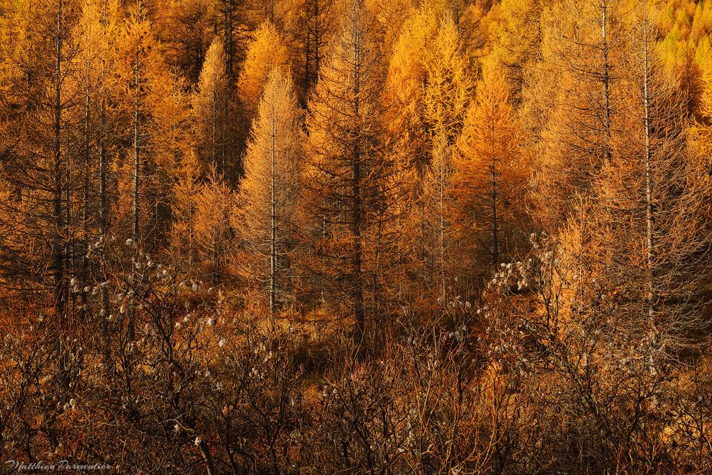 Autumnal mix by matthieu-parmentier