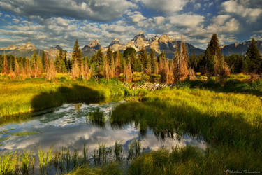 The beaver dam by matthieu-parmentier