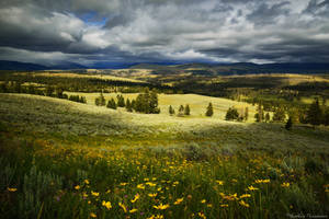 The vast lands of Yellowstone