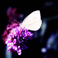 My Sweet Violet by I-Heart-Photo