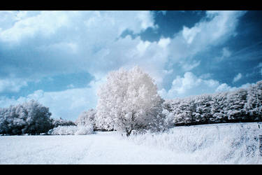 Winter Wonderland by I-Heart-Photo