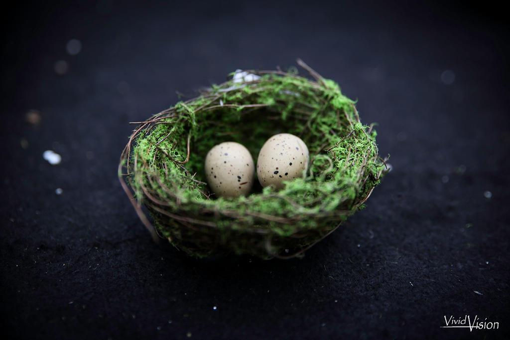 Nest by vi-ki