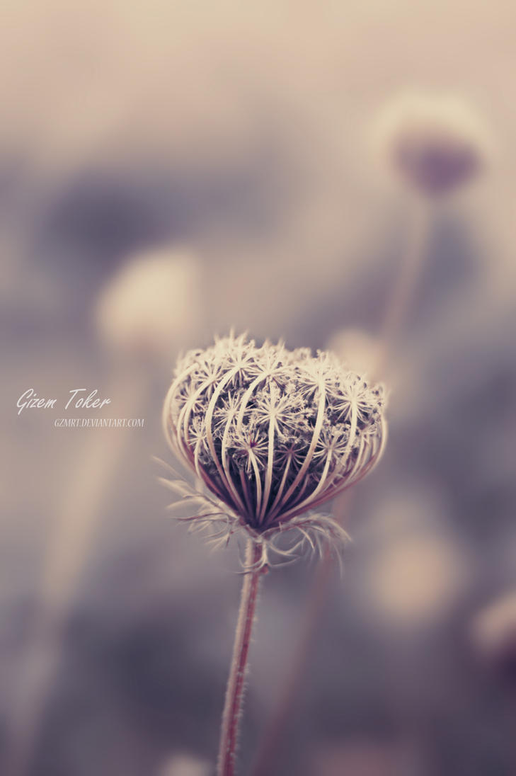 Beautiful Pale by gzmrt