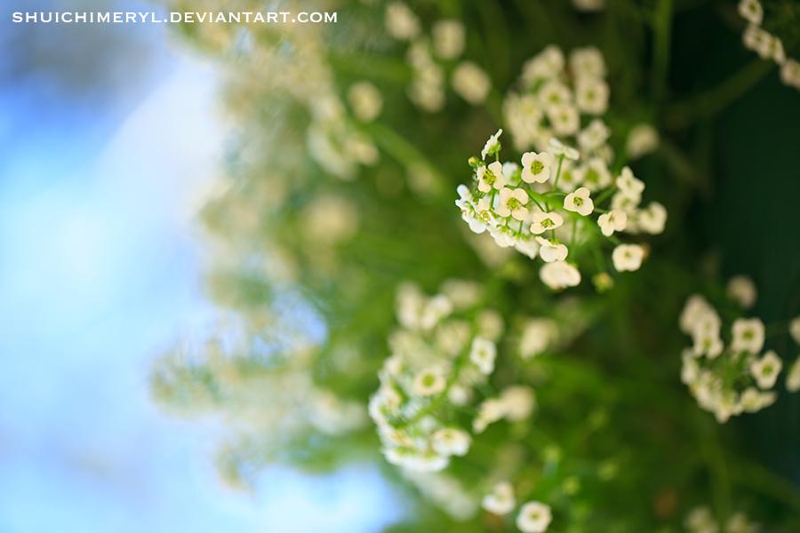 little flowers by shuichimeryl