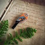 Cinnamon Flycatcher brooch