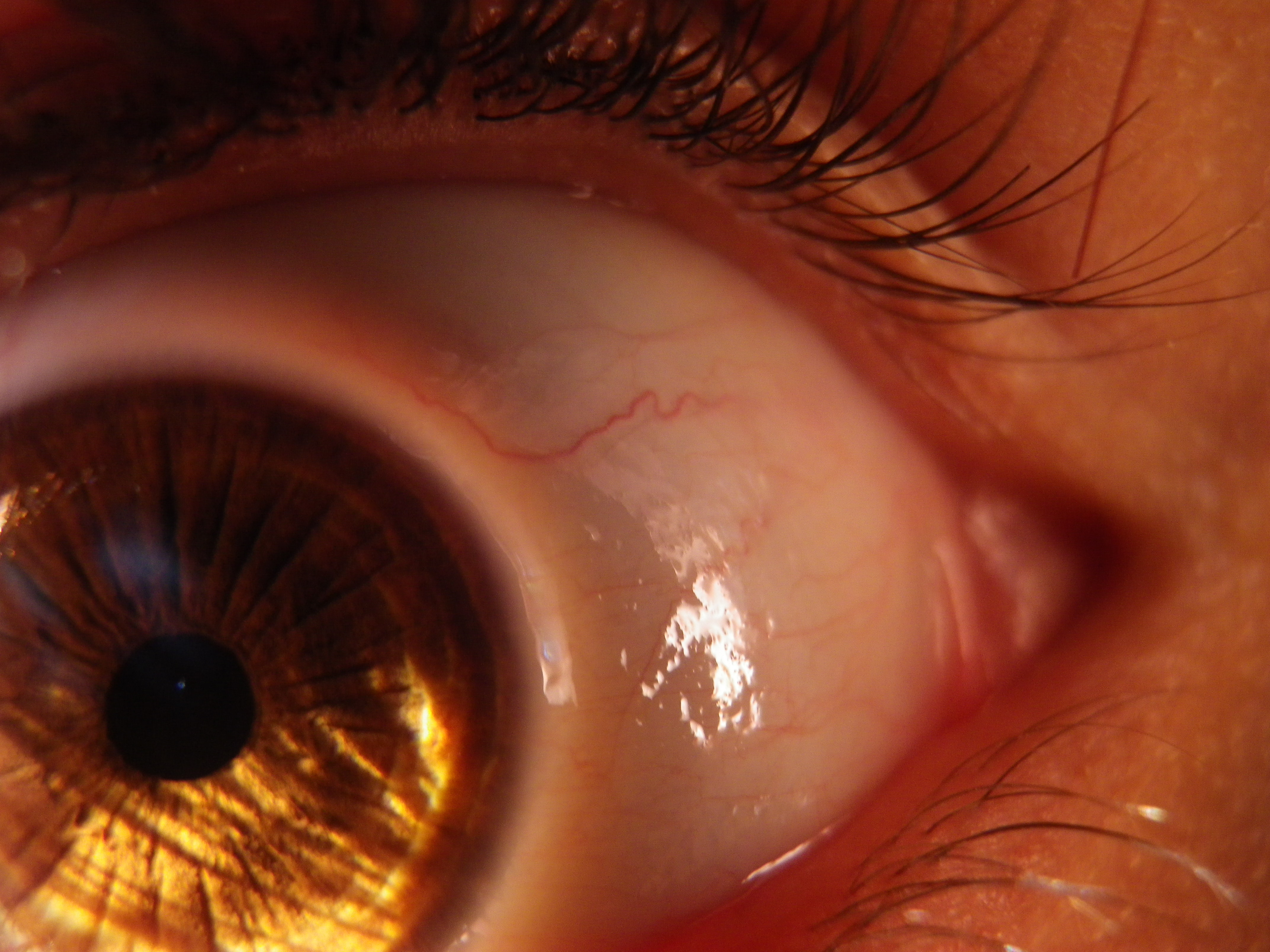 Eye by SeelenFur