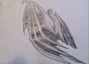 how to draw dragon wings folded