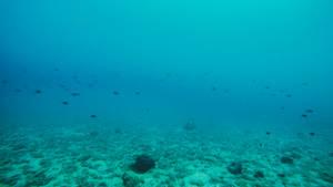Underwater V1... by Dark-Indigo-Stock