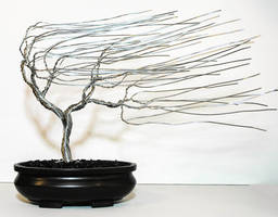 Bonsai Tree #30