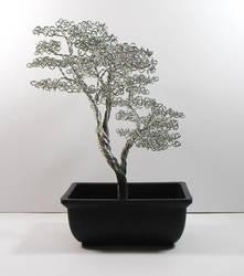 Bonsai Tree #38