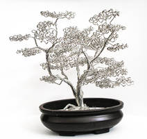 Bonsai Tree 21