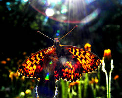 Sunray's butterfly blessing