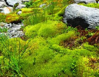 Swampy paradise by AntaresAquarii